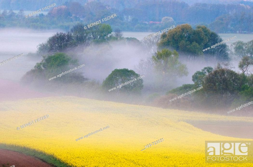 Stock Photo: Main valley near Kulmbach, morning mist in spring, rape field and riparian meadow land, Franconia, Bavaria.