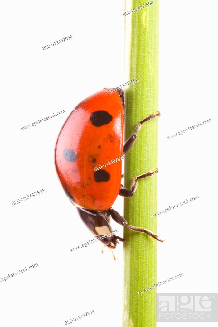 Stock Photo: Close-up to a lady bug.