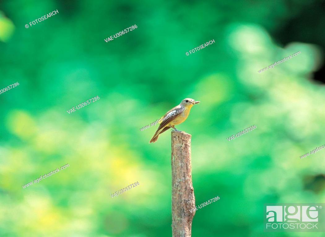 Stock Photo: background, animal, scenery, nature, bird, film.