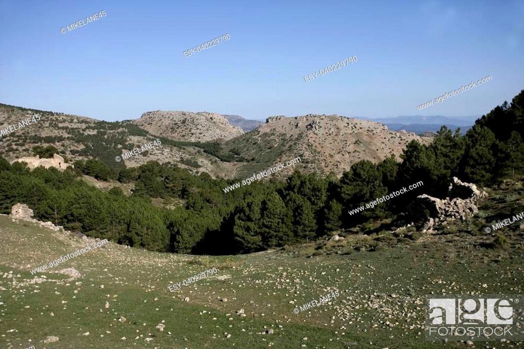 Stock Photo: Espuna mountain, National Park, Murcia, Spain, Pine woodlands.