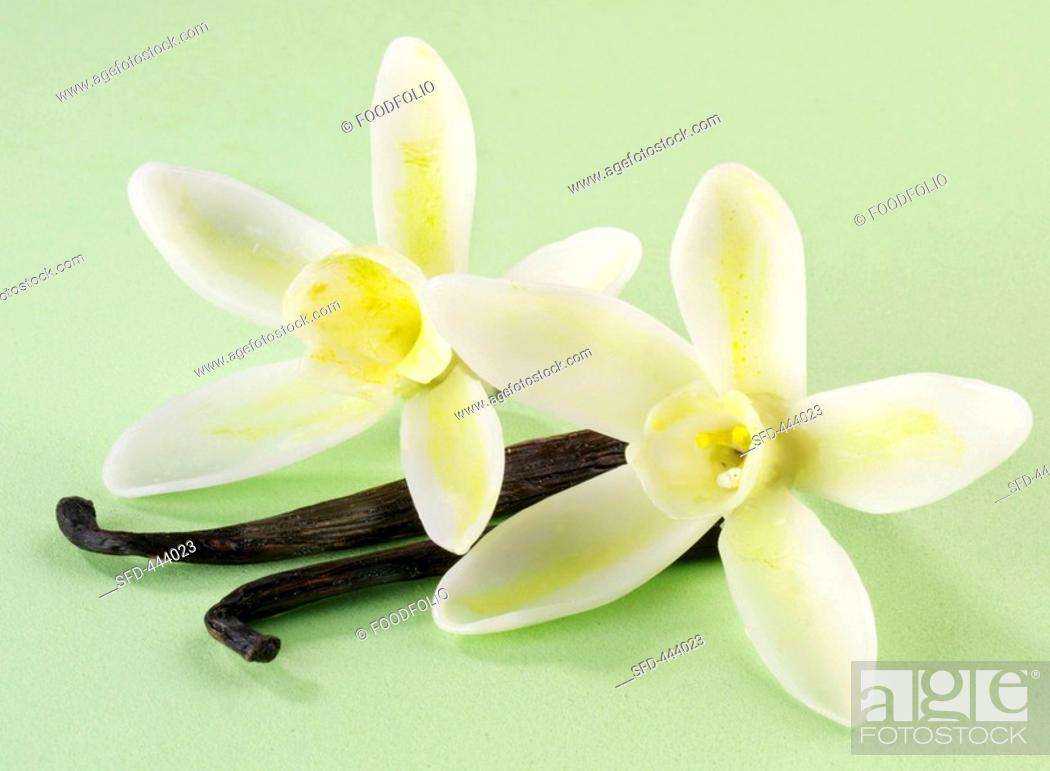 Stock Photo: Vanilla pods and flowers.