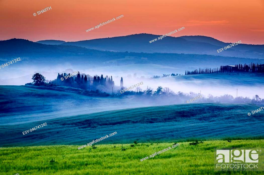 Stock Photo: Farm of olive groves and vineyards in foggy sunrise.