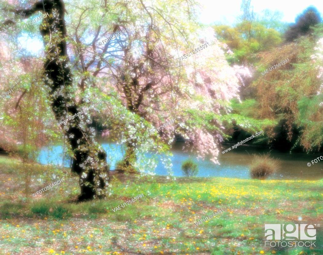 Stock Photo: spring, scenery, cherryblossom, tree, landscape, blur, nature.