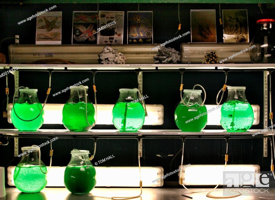 Stock Photo: Laboratory green.