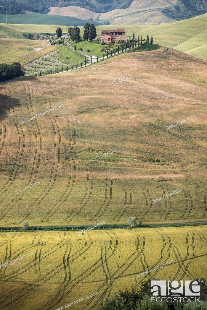 Photo de stock: The curved shapes of the multicolored hills of the Crete Senesi (Senese Clays) province of Siena Tuscany Italy Europe.