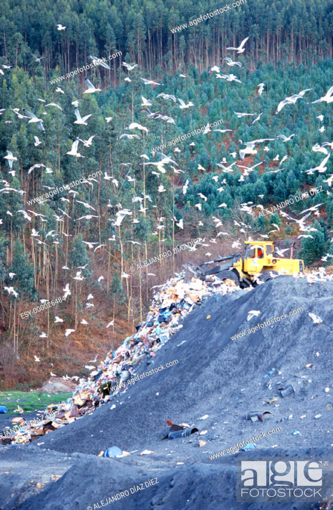 Stock Photo: Seagulls and shovel in landfill. Cantabria. Spain.