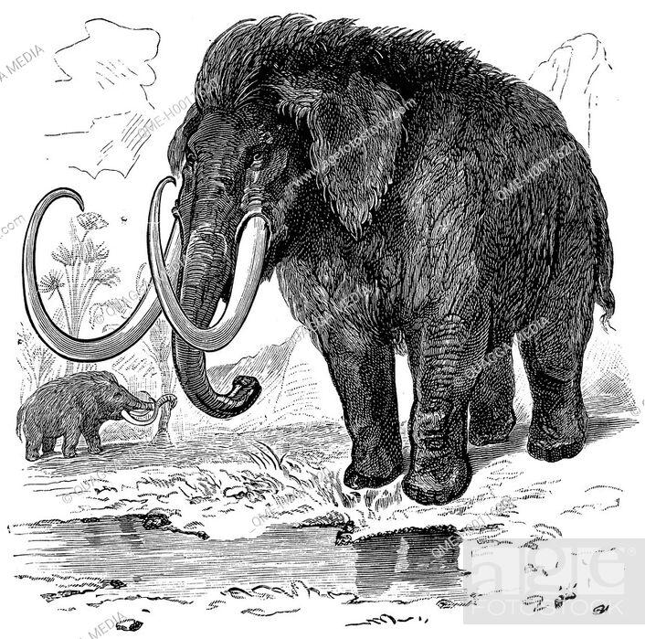 Stock Photo: Mammoth.