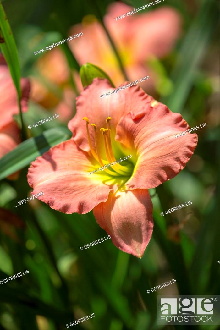 Imagen: pink flower.