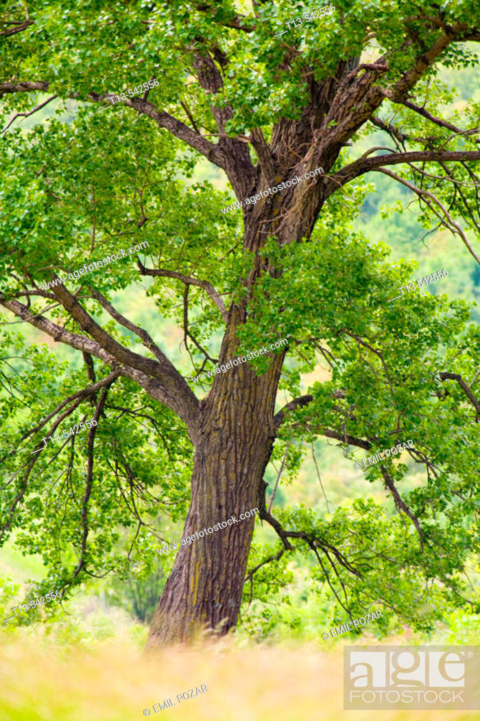 Stock Photo: Low angle distant photo of green grown tree.