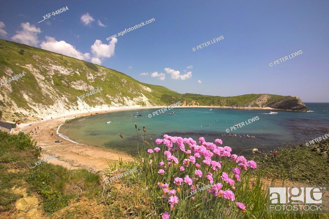 Stock Photo: Lulworth Cove and Thrift Armeria maritima Dorset Uk.