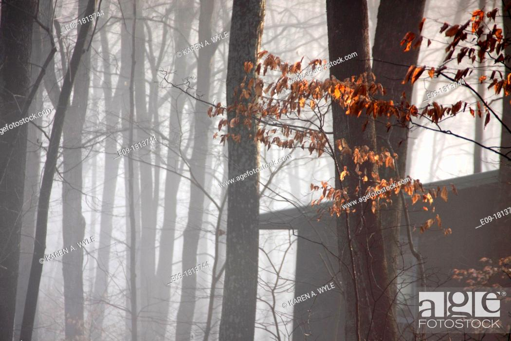 Stock Photo: mostly bare trees and corner of house or shed in morning mist, sunlight touching a few bronze-red leaves, Indiana.