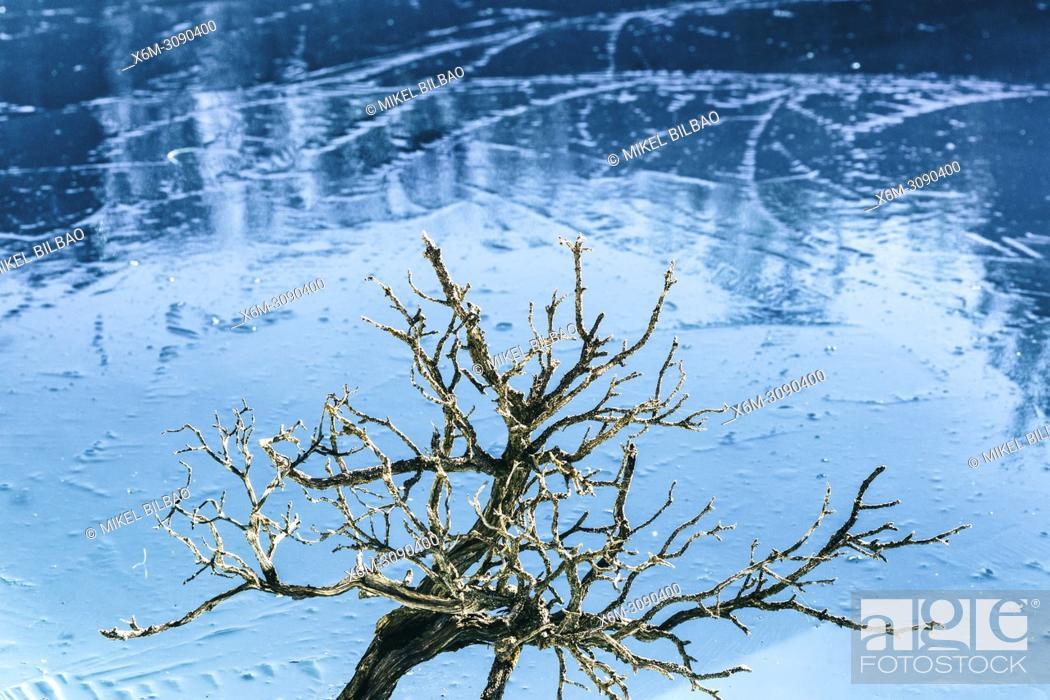 Imagen: Tree on an frozen lake.