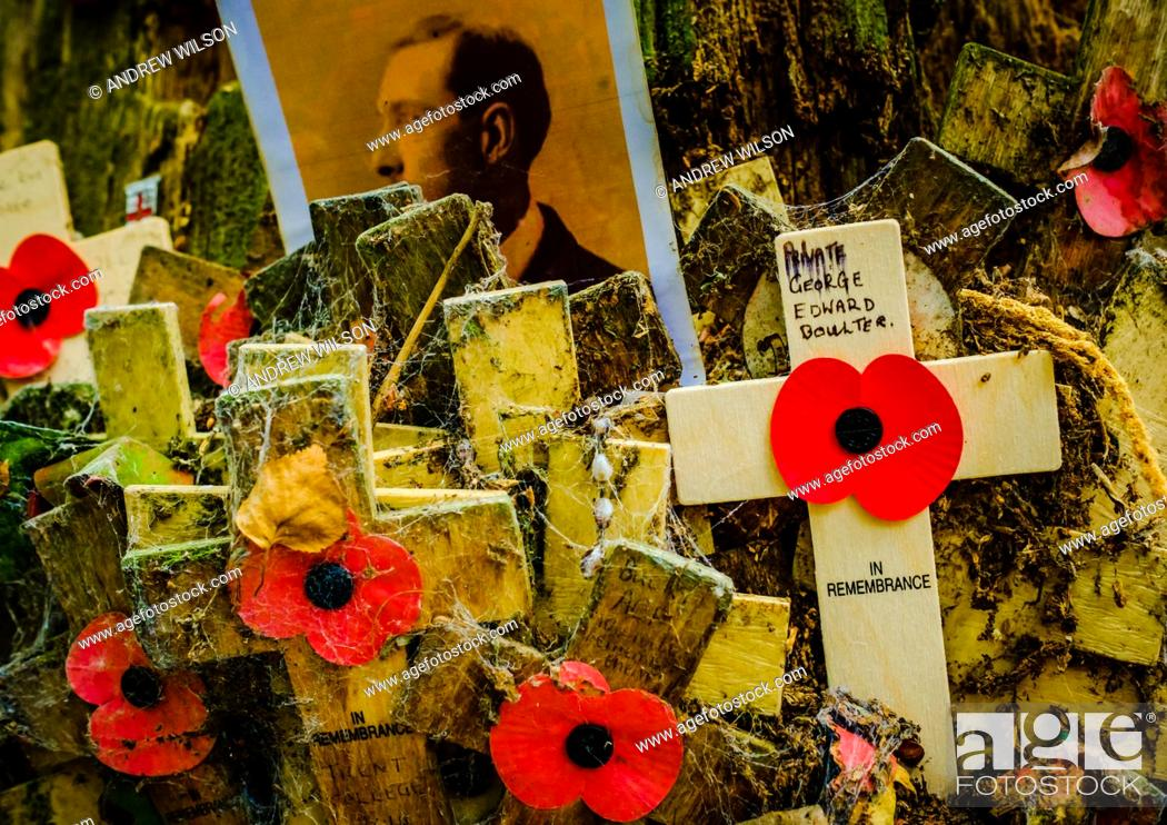 Stock Photo: Remembrance crosses attached to a tree in Sanctuary Wood Near Passchendaele, Belgium.