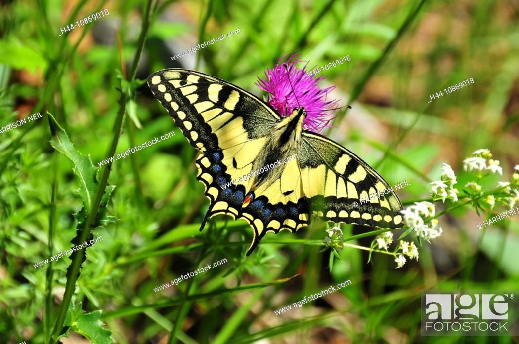 Yellow Papilio Machaon Swallowtail Butterfly Illustration Journal ... | 696x1049