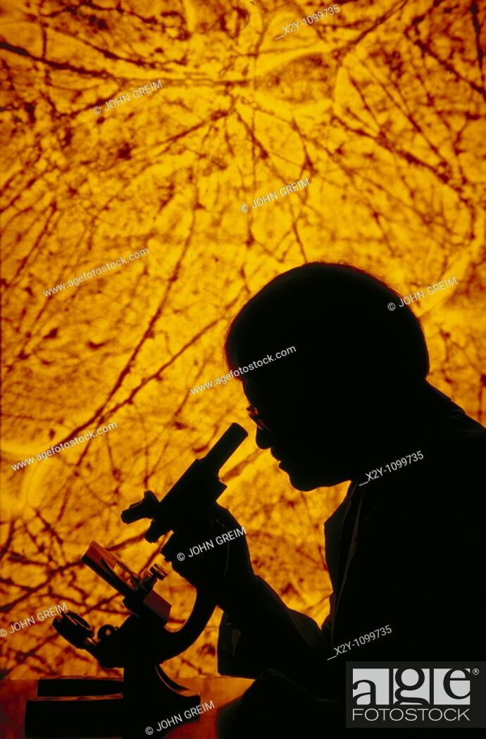 Stock Photo: RESEARCHER LOOKING INTO A MICROSCOPE WITH NEUROLOGY SLIDE PROJECTED IN BACKGROUND.