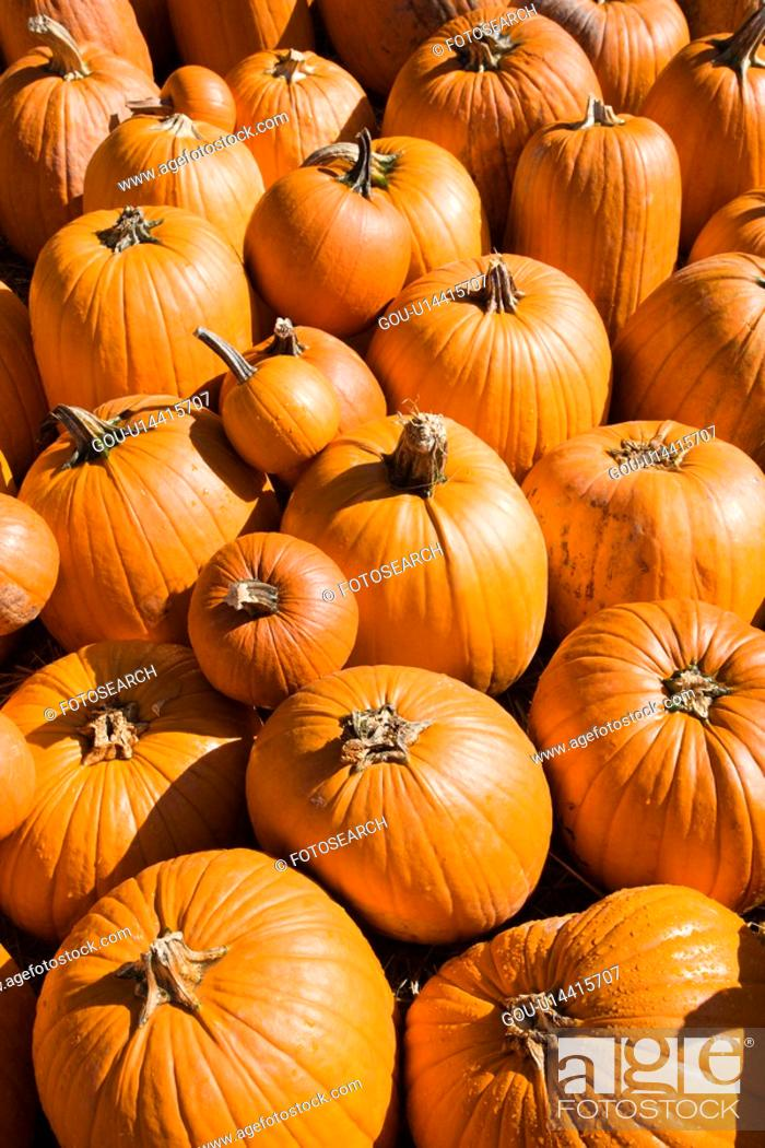 Stock Photo: Pile of Fall pumpkins at outdoor market.