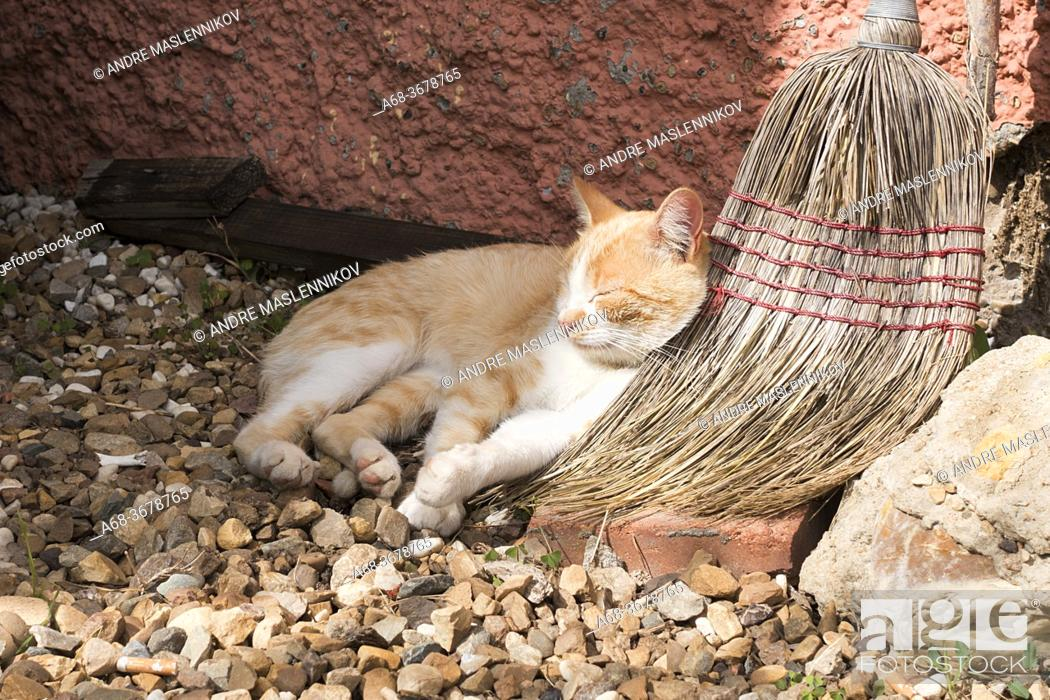Stock Photo: Cat Sleeping.