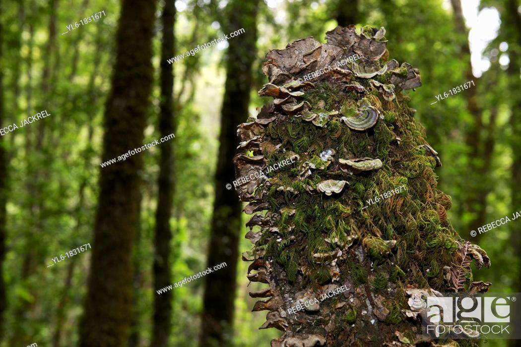 Stock Photo: Tree stump covered with moss and tree fungus.