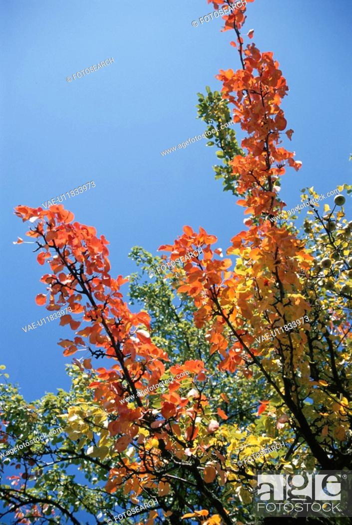Stock Photo: The Branch Of Autumn Leaves And Blue Sky.