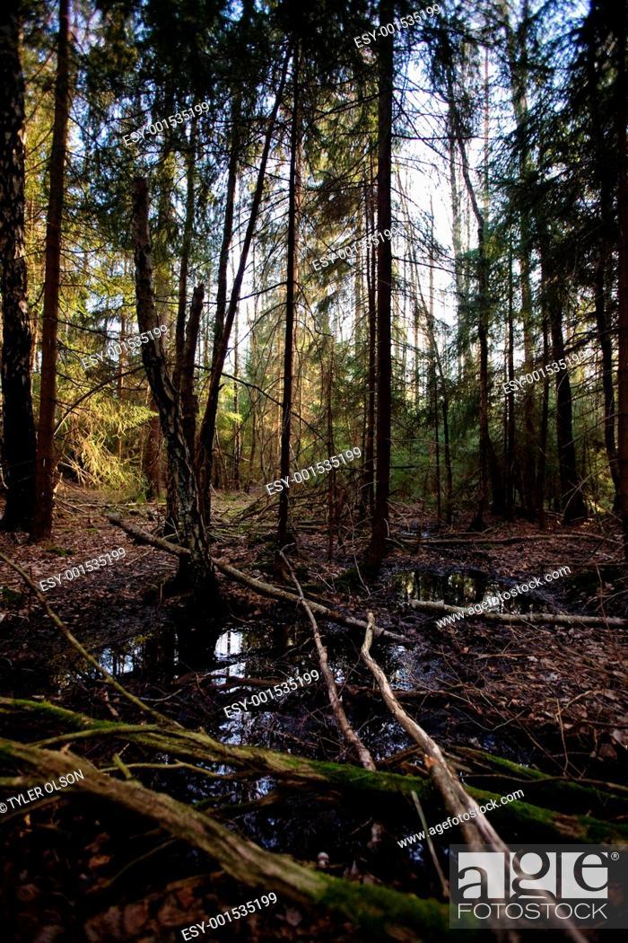 Stock Photo: Swamp.