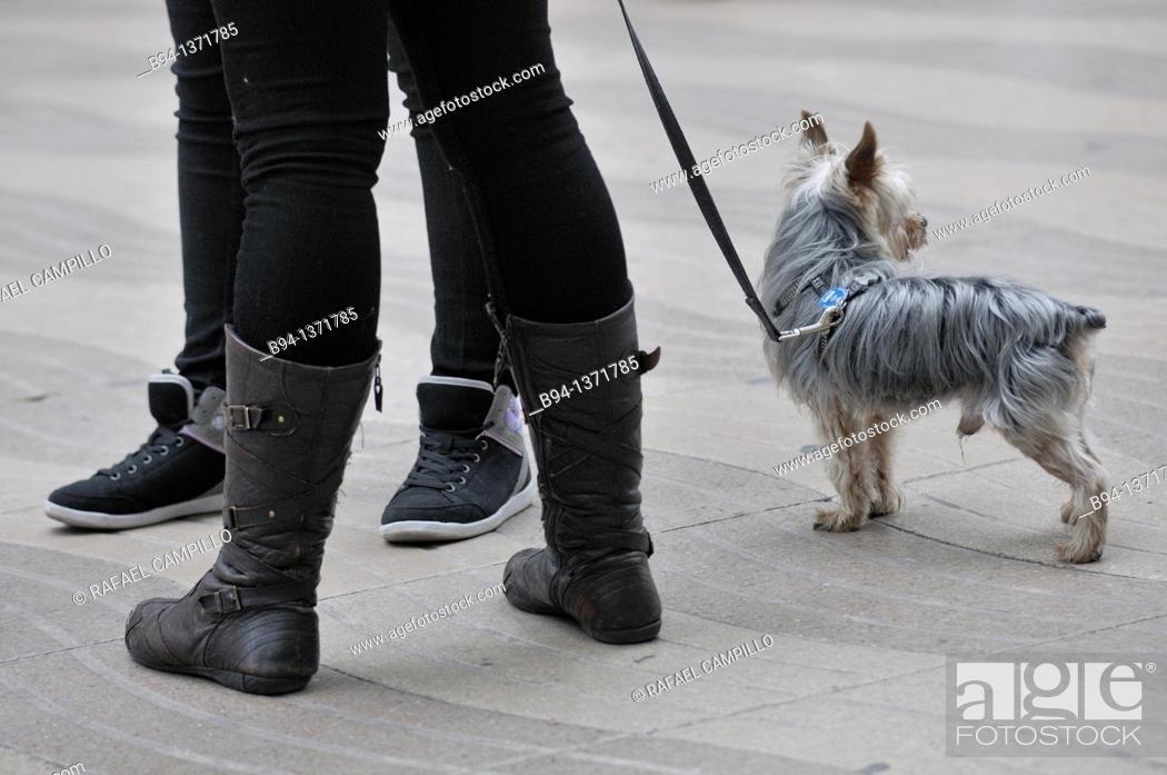 Stock Photo: Dog, La Rambla, Barcelona, Catalonia, Spain.