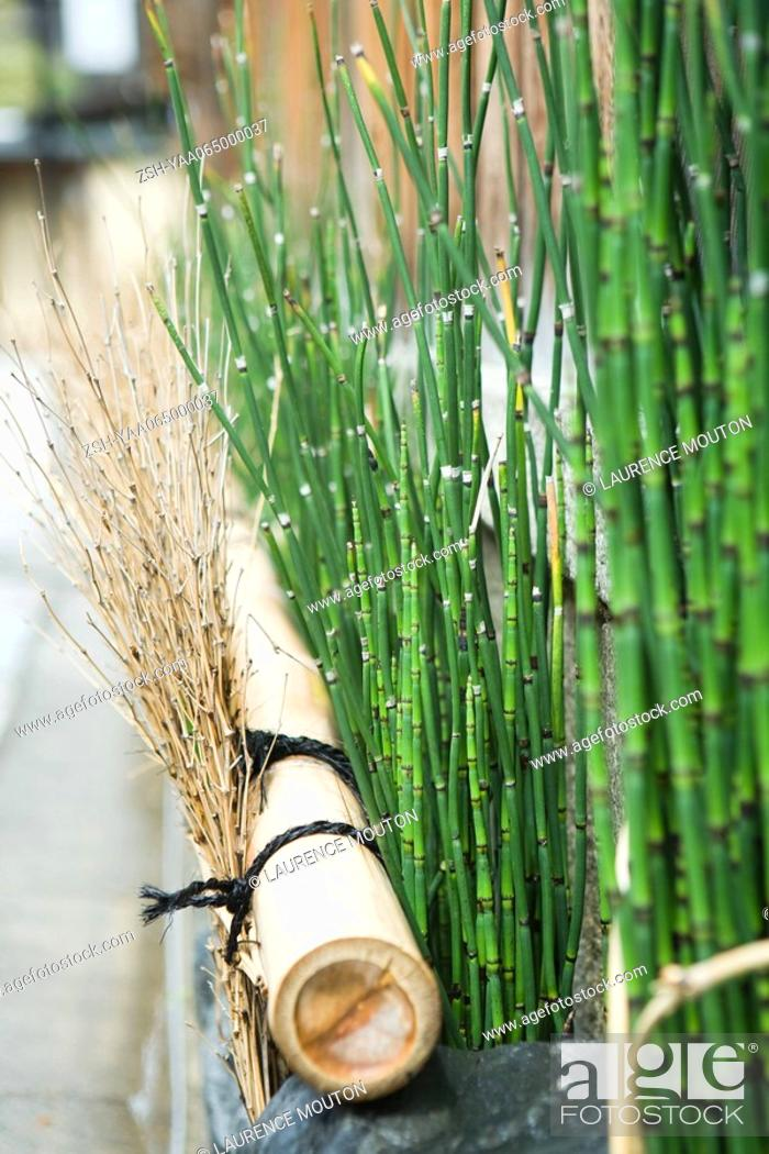 Stock Photo: Rushes and dried twigs, close-up.