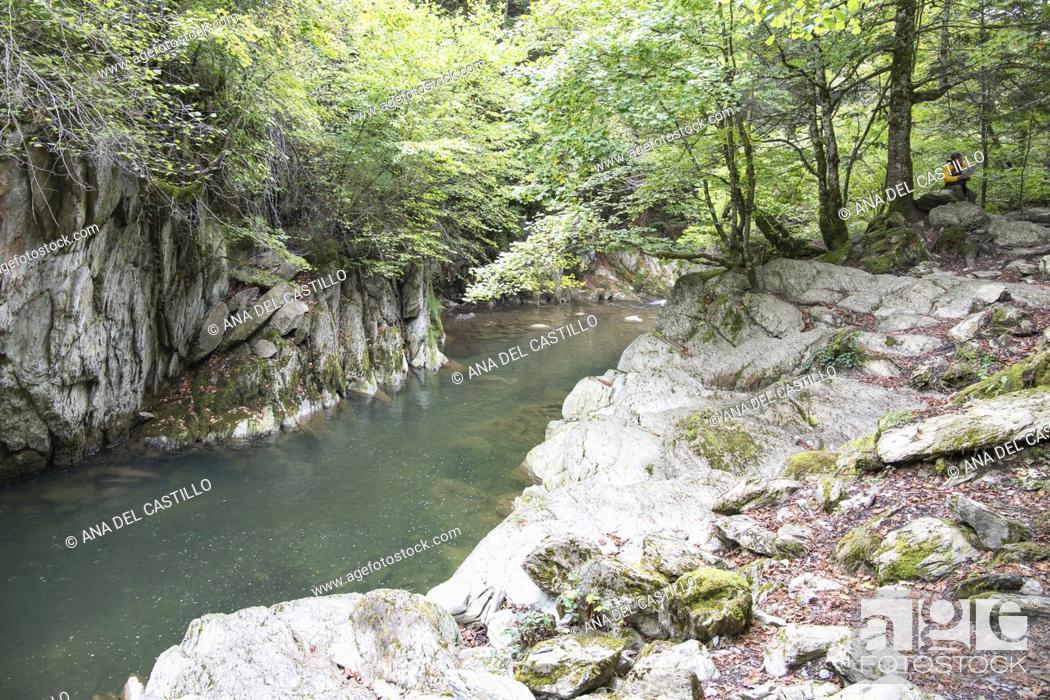 Stock Photo: Autumn forest Selva de Irati fall beech jungle in Navarra Pyrenees of Spain.