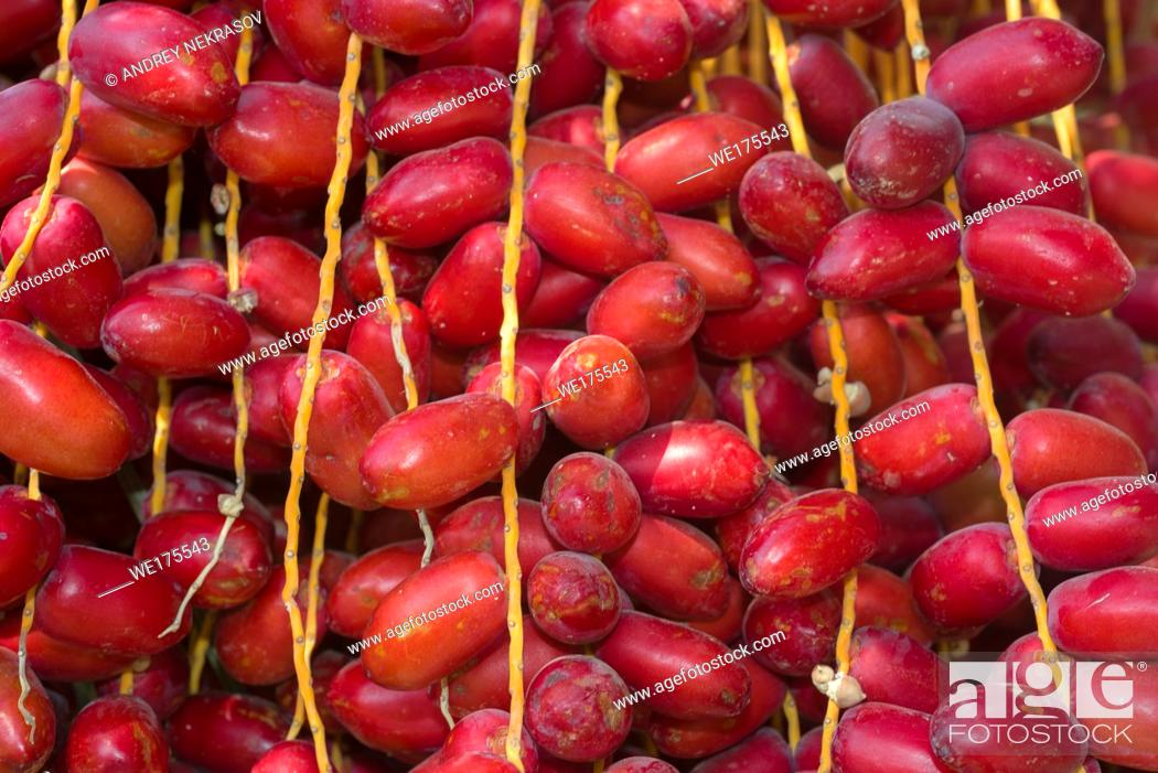 Stock Photo: Closeup, Ripe red fruits dates swaying to the wind on date palm. Background red fruits dates.