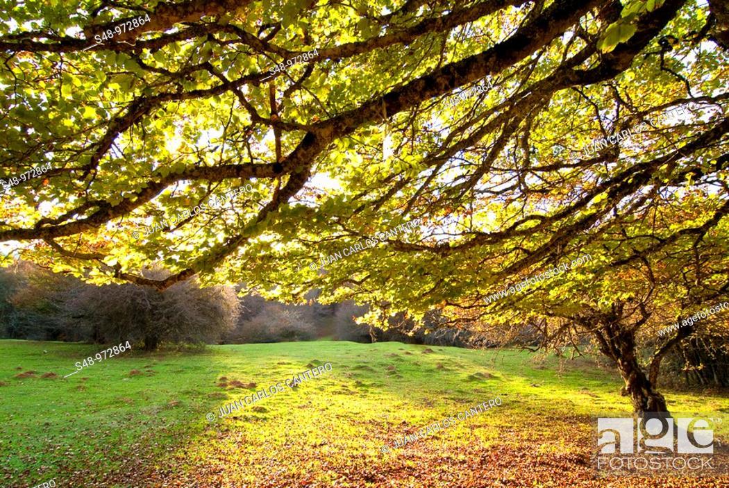 Stock Photo: Autumn in the Aralar. Navarra. Spain.