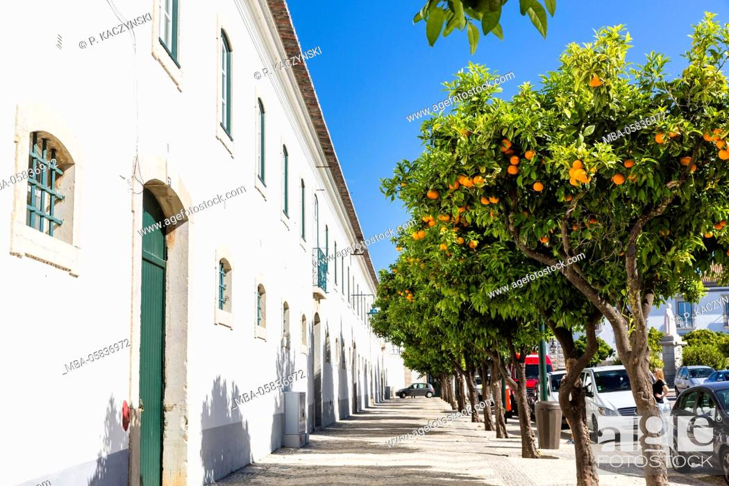Stock Photo: Orange trees in front of the Paço Episcopal, the episcopal palace, on the Square Largo da Sé, Faro, Algarve, Portugal.