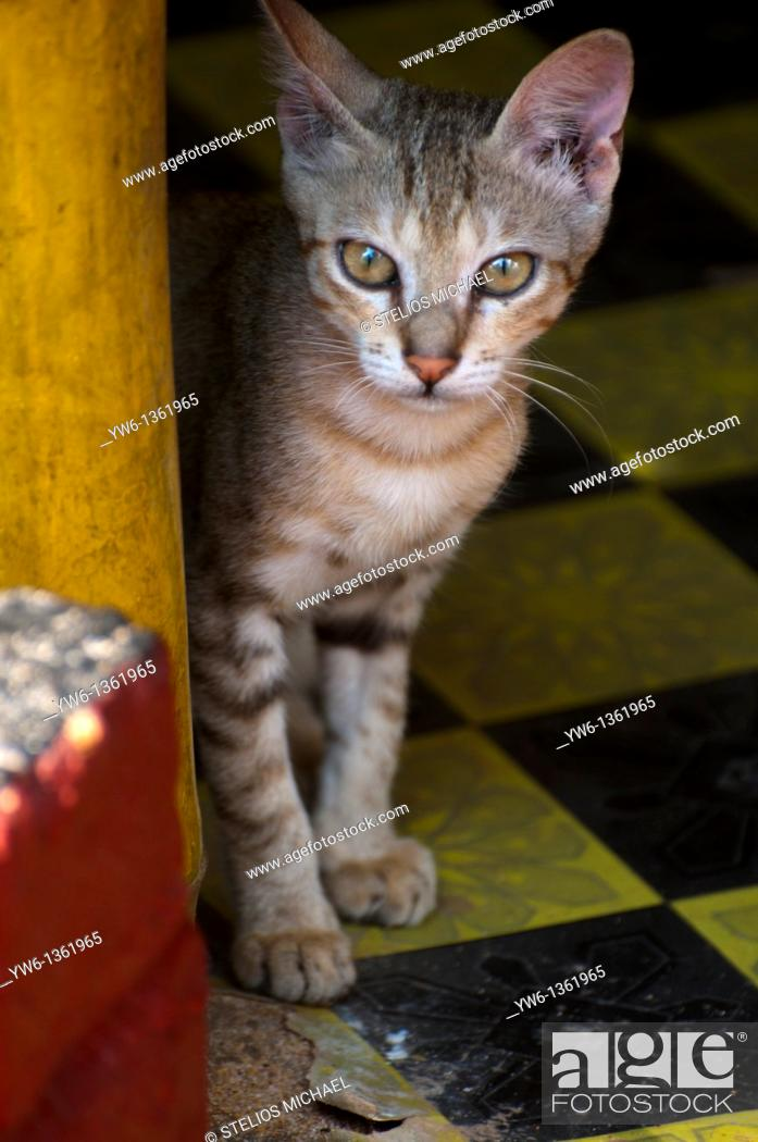 Stock Photo: Young cat hiding behind a bamboo chair in Varkala, southern India.