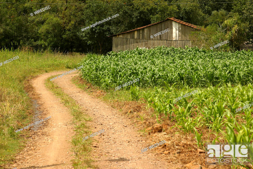 Stock Photo: Ranch, plantations, corn, agriculture, Brazil.