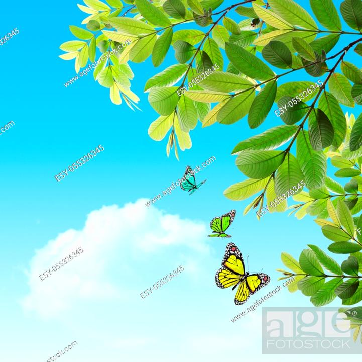 Stock Photo: butterfly on the background of the young spring leaves with blue sky.