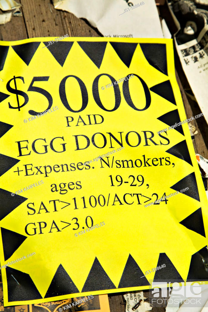 Stock Photo: TEXAS  Austin   Sign posted on University of Texas campus, money offered to egg donors with qualifications.
