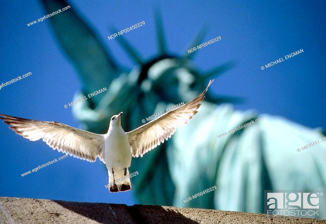 Stock Photo: A white bird flying near the statue of liberty,USA.