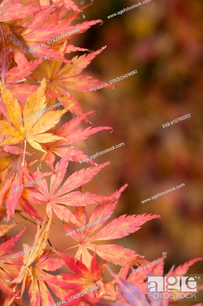 Stock Photo: Autumn nature.