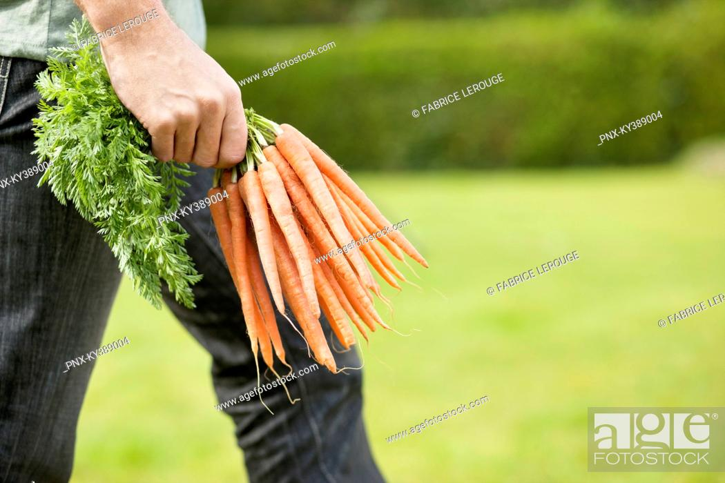 Stock Photo: Man holding a bunch of carrots.