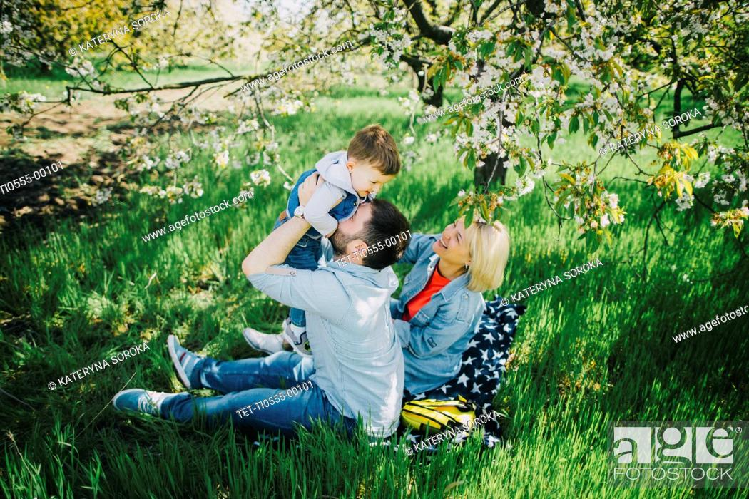 Stock Photo: Parents with son (2-3) in orchard.