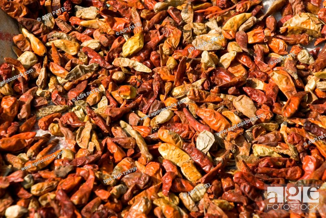 Stock Photo: Red Chillies (spices) being dried in sun ; Konkan ; Sindhudurg district ; Maharashtra ; India ; Asia.