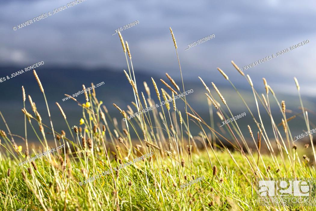 Stock Photo: Coast of the Isle of Mull, Argyll and Bute, Scotland.