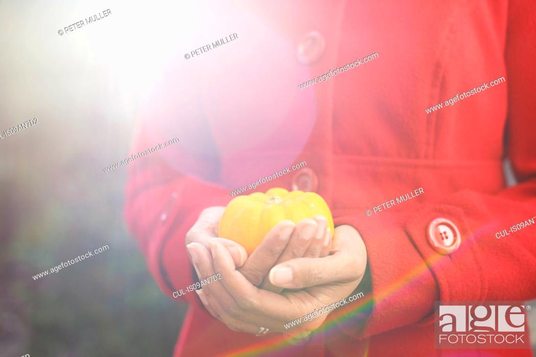 Stock Photo: Close up of womans hands cupping small pumpkin in garden.