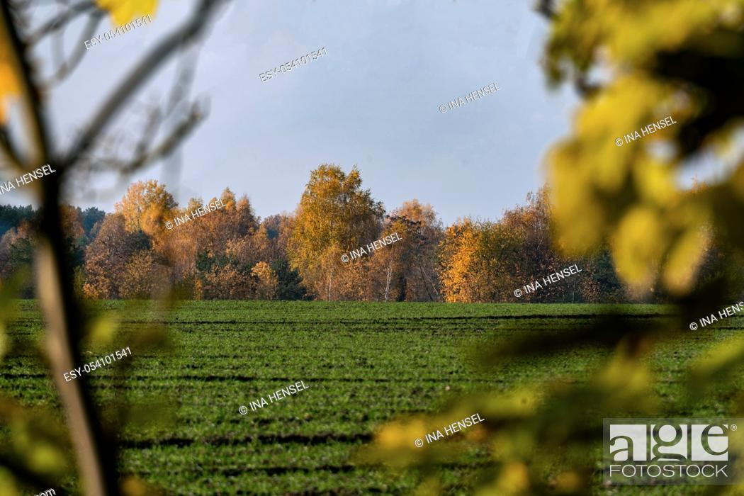 Stock Photo: Overlooking a green field on a sunny autumn day with yellow trees in the background and foreground.