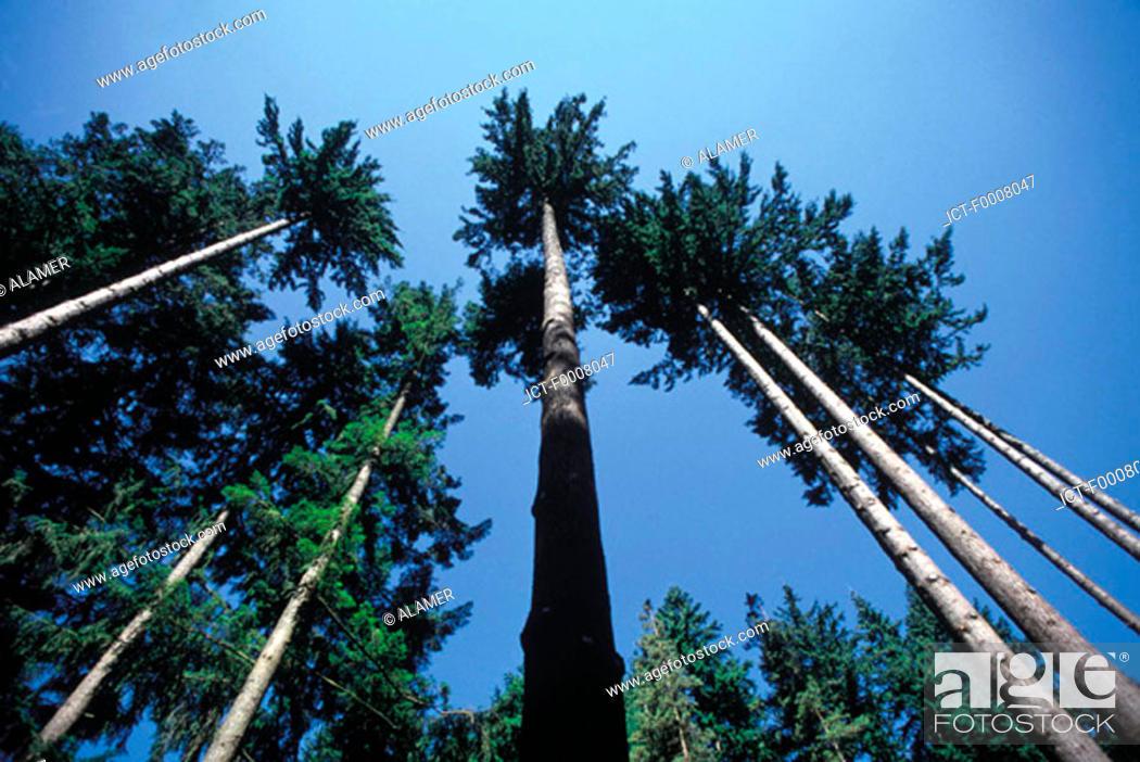 Stock Photo: France, Auvergne, coniferous forest.