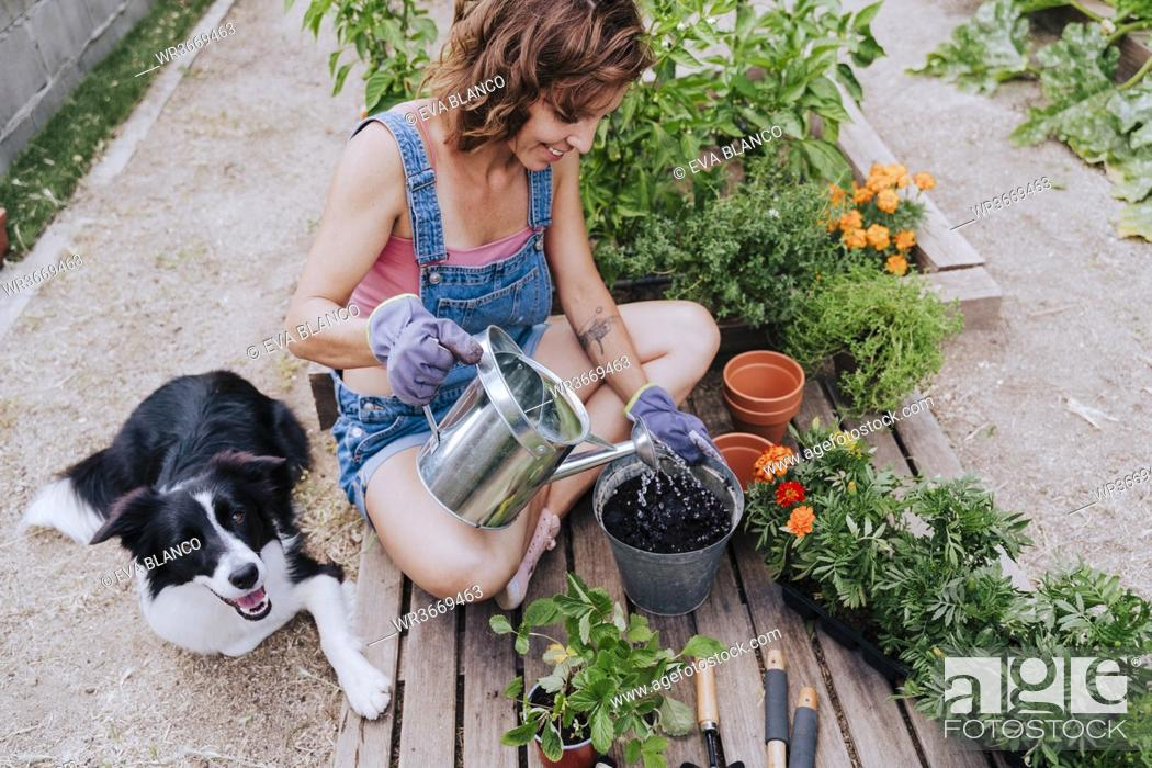 Stock Photo: Woman watering plant while sitting with border collie at vegetable garden.