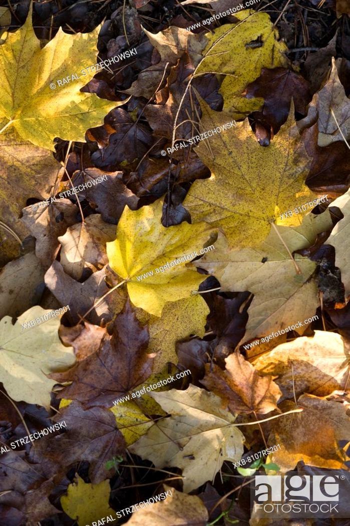 Stock Photo: Autumn nature.