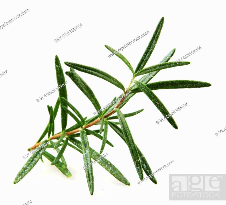 Stock Photo: Fresh Rosemary Herb On White Background.