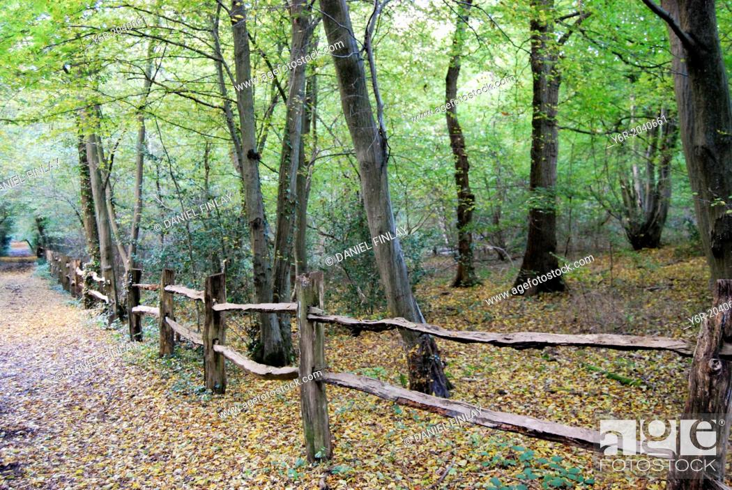Stock Photo: Ruislip Woods Nature Reserve on the outskirts of London, England, in Fall / Autumn.