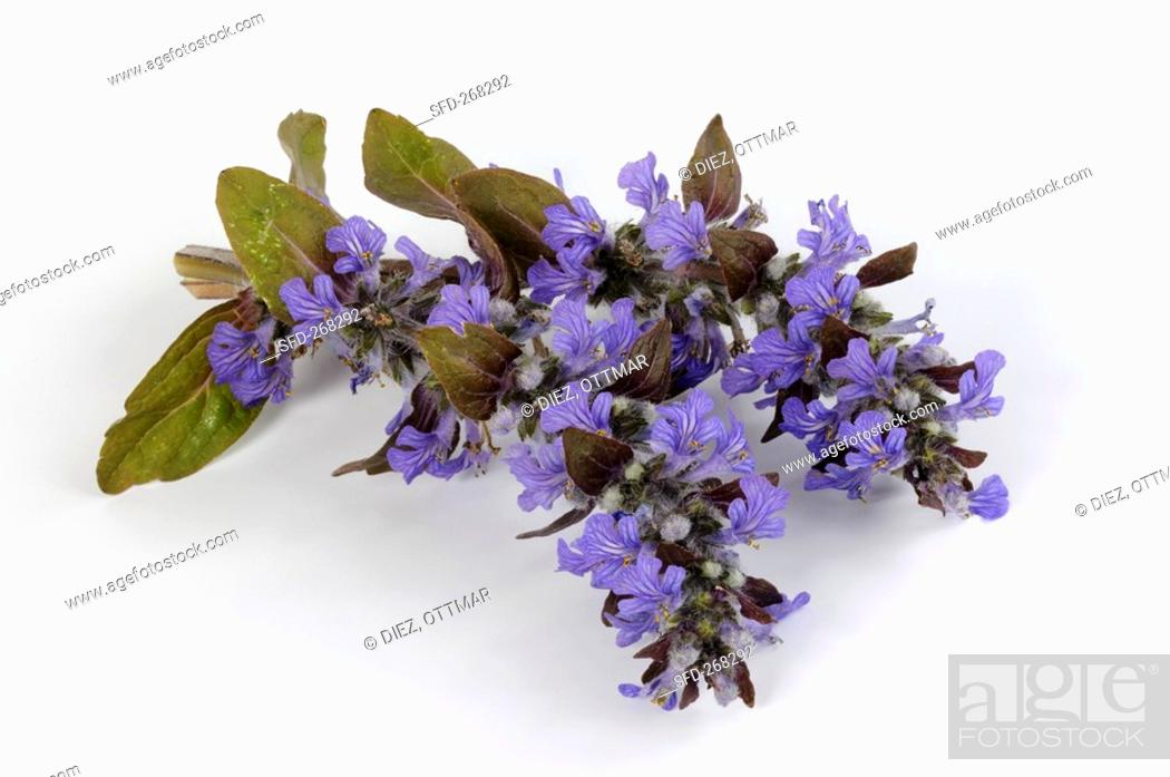 Stock Photo: Bugle with flowers.