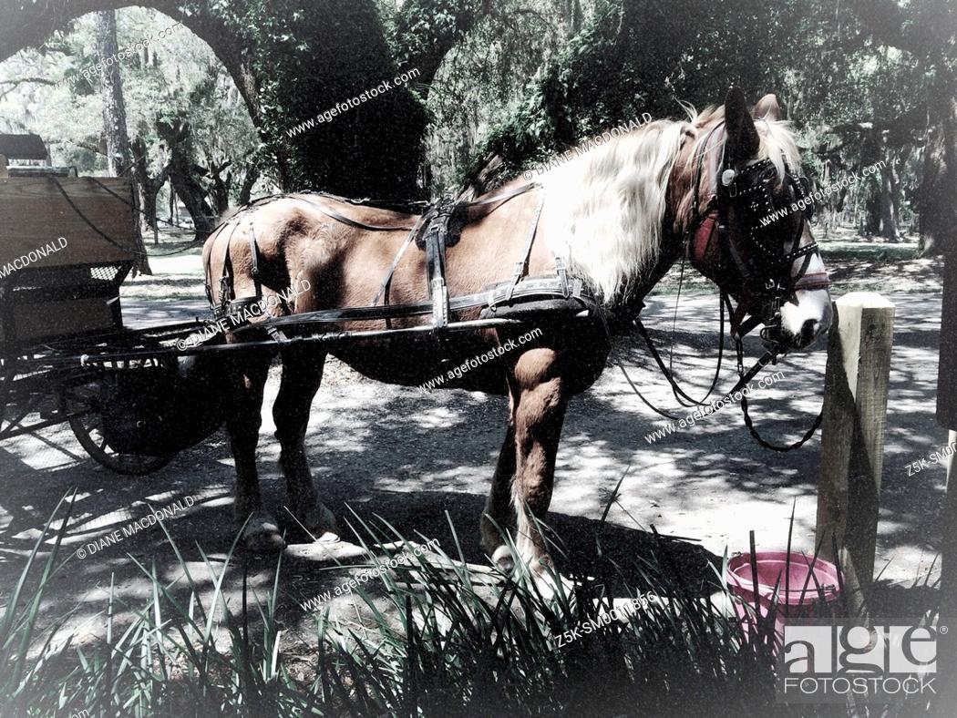 Stock Photo: Horse and buggy at The Jekyll Island Club, Jekyll Island, Georgia.