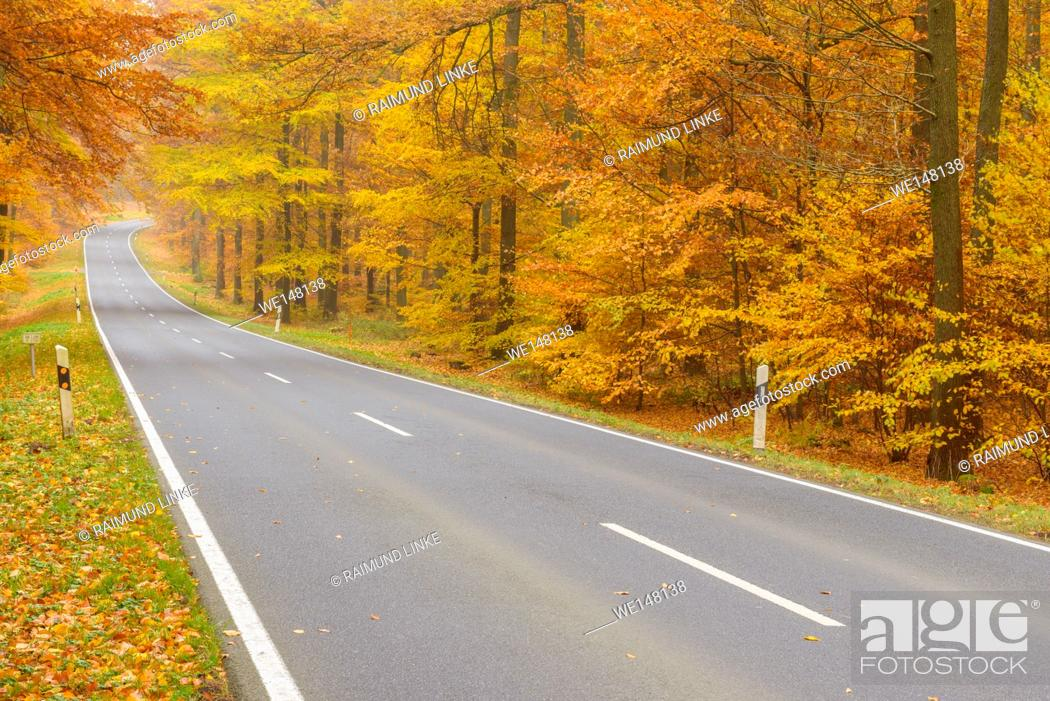 Imagen: Country Road in Beech Forest, Autumn, Spessart, Bavaria, Germany.